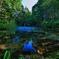神の棲む池