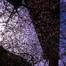 CANON Canon EOS 40Dで撮影した風景(天城に咲く)の写真(画像)