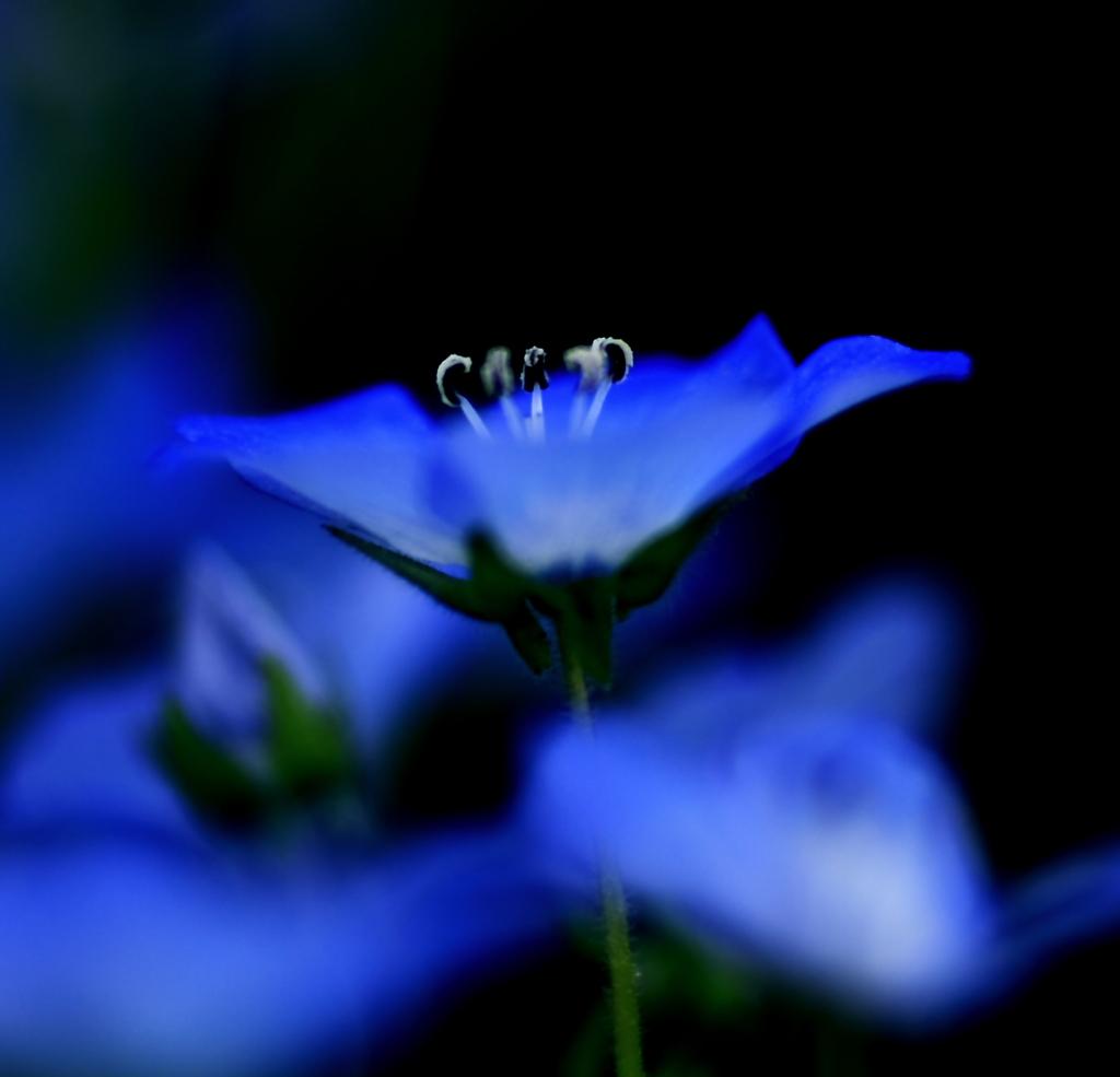 青い妖精 Ⅲ