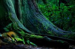 シシ神の森