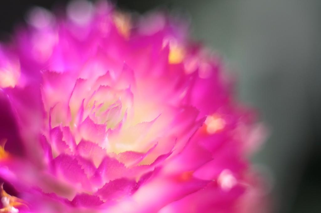 花の名知らずf(^ー^;