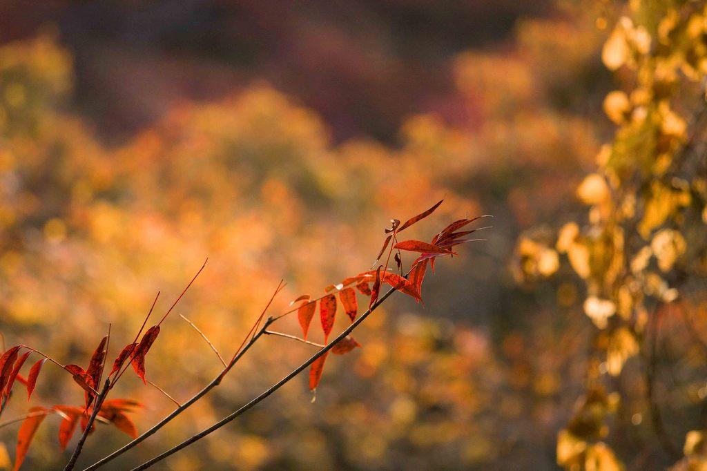 黄金色の秋