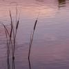 水辺の夕刻