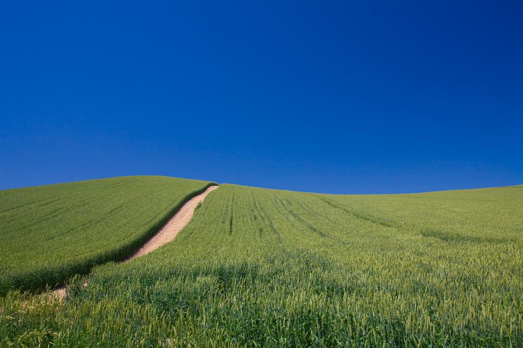 麦の育つ大地に