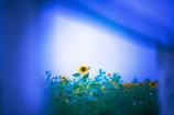 幻想の向日葵畑