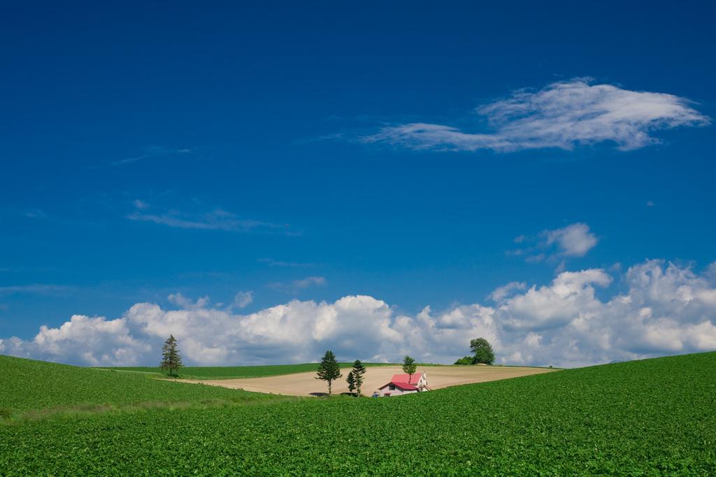 緑の丘・赤い屋根