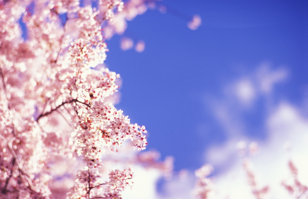 青空・雲・桜