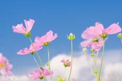 花、陽光透けて