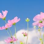 CANON Canon EOS Kiss Digital Nで撮影した植物(花、陽光透けて)の写真(画像)