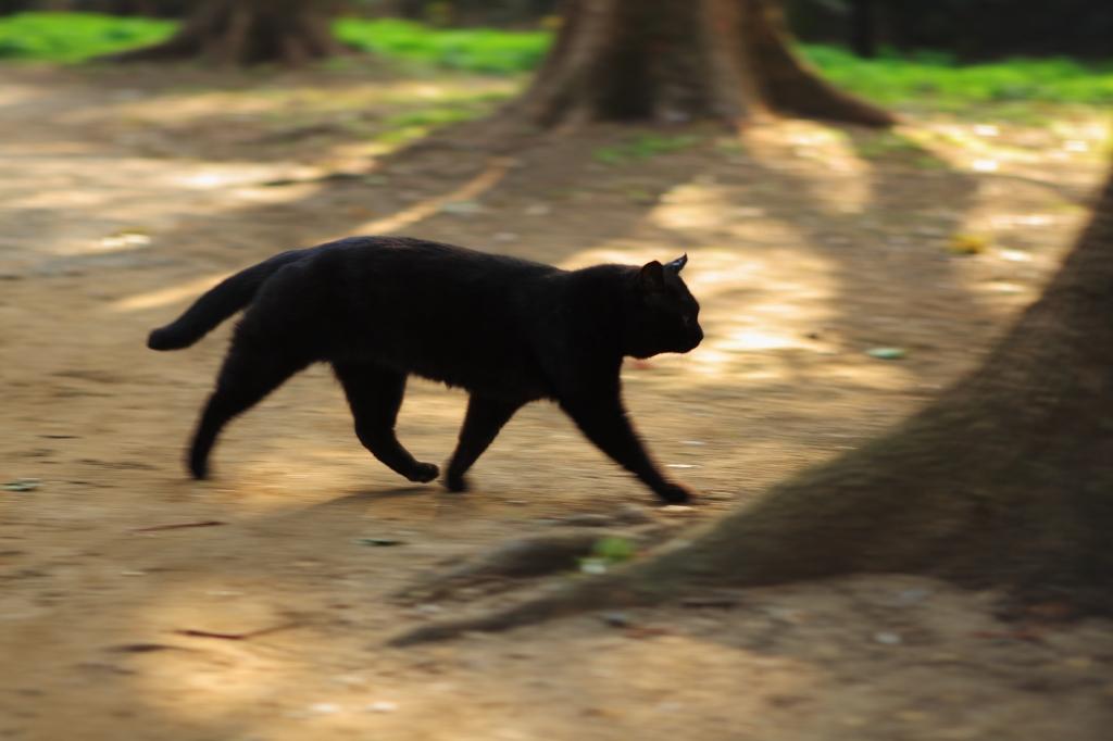 黒猫のウォーキング