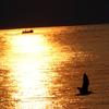 影絵小屋・逗子海岸(カモメが飛んだ日)