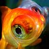 魚眼を魚眼で・・・。