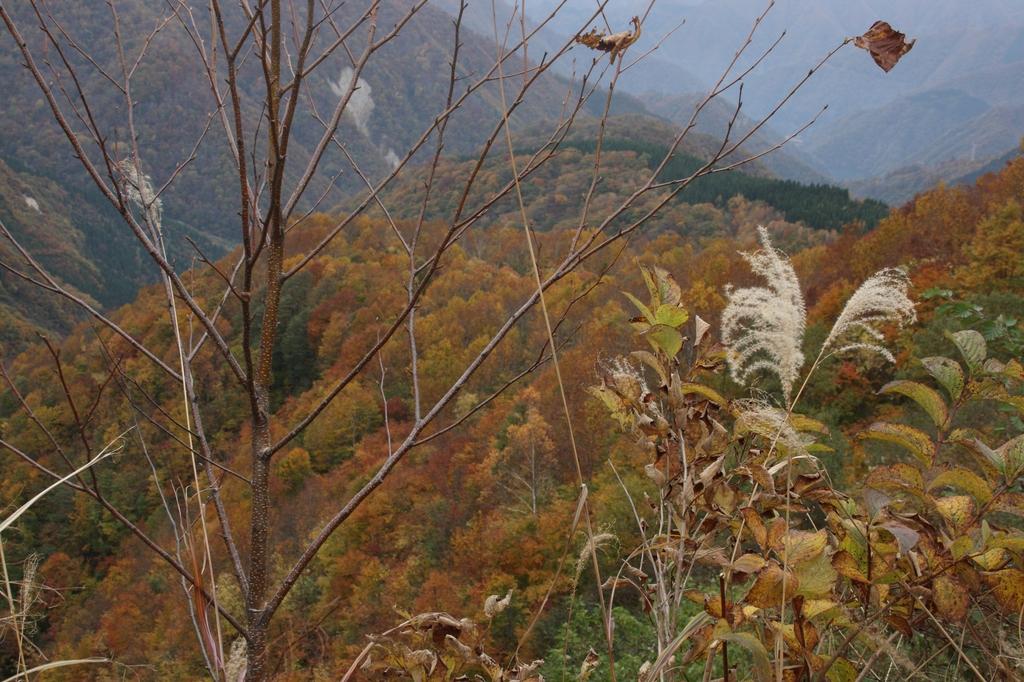 白山スーパー林道 2