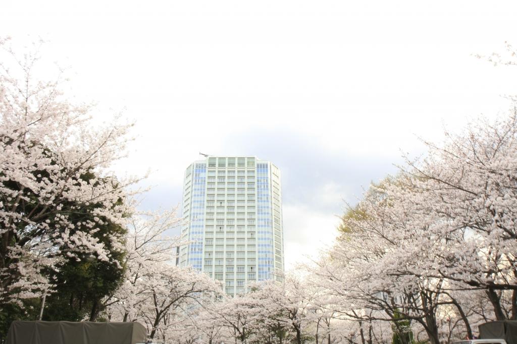 桜の丘に起つ