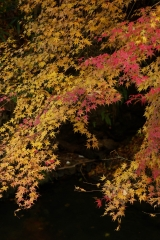 京都 大原 紅葉3