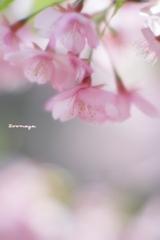春が来た~