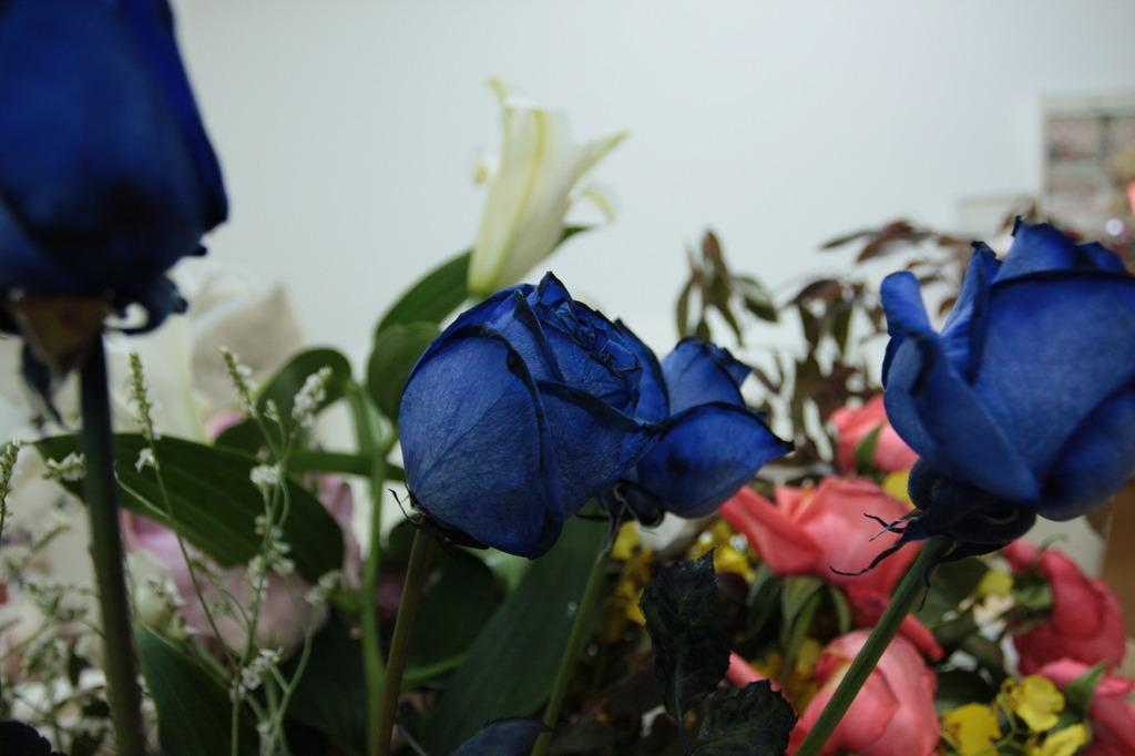 青いバラが咲いた