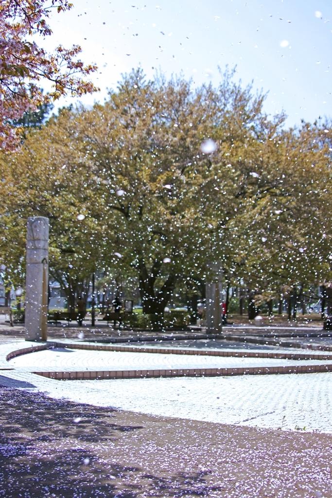 さくら吹雪
