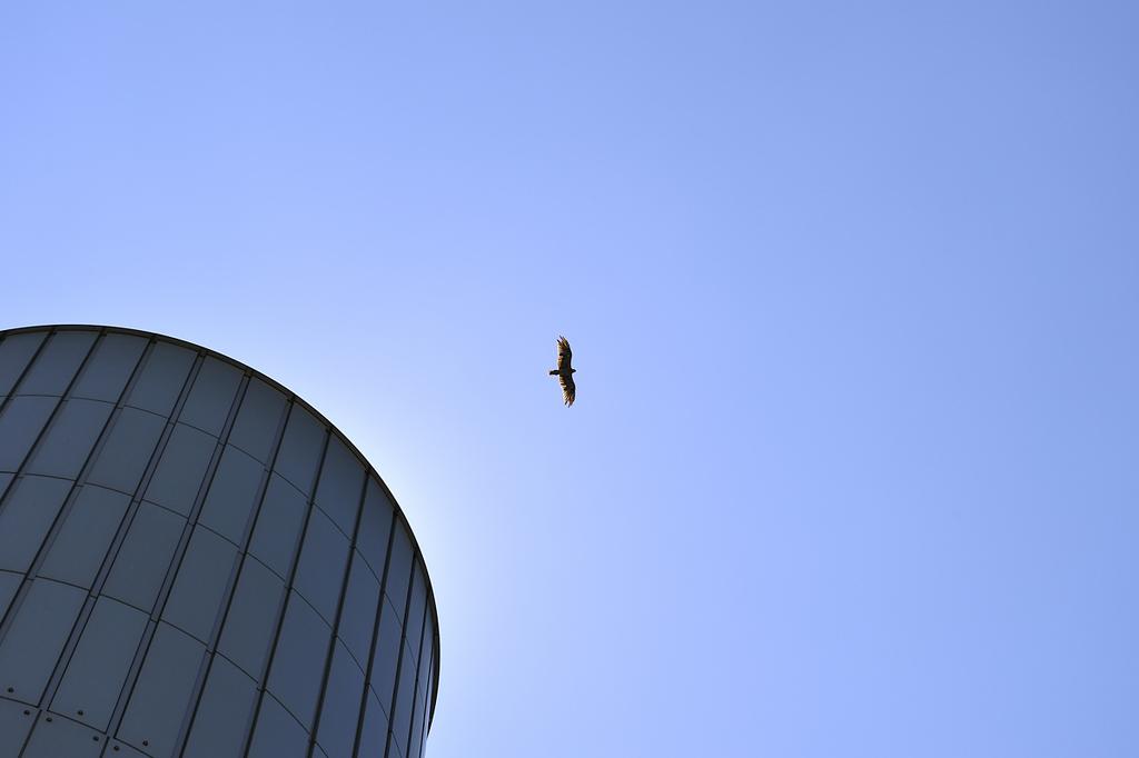 Bird in The Blue