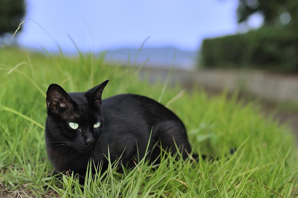 猫にレフ判