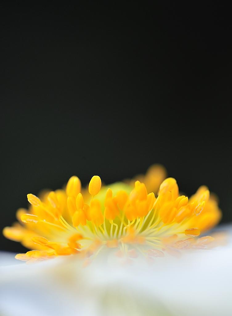 題名の無い花