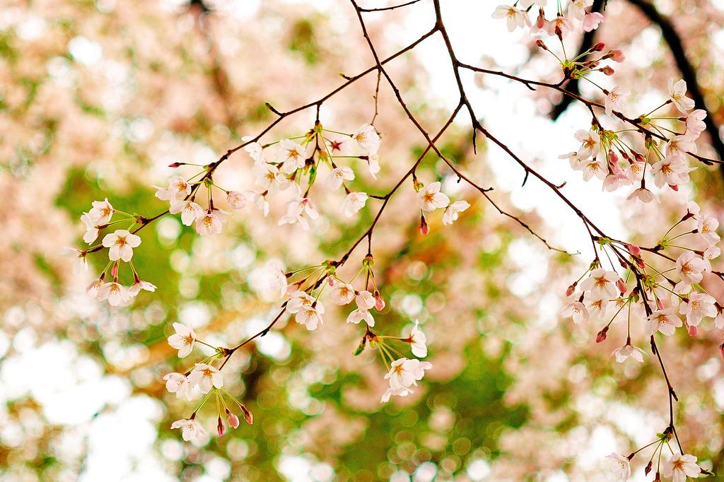 春を見上げて