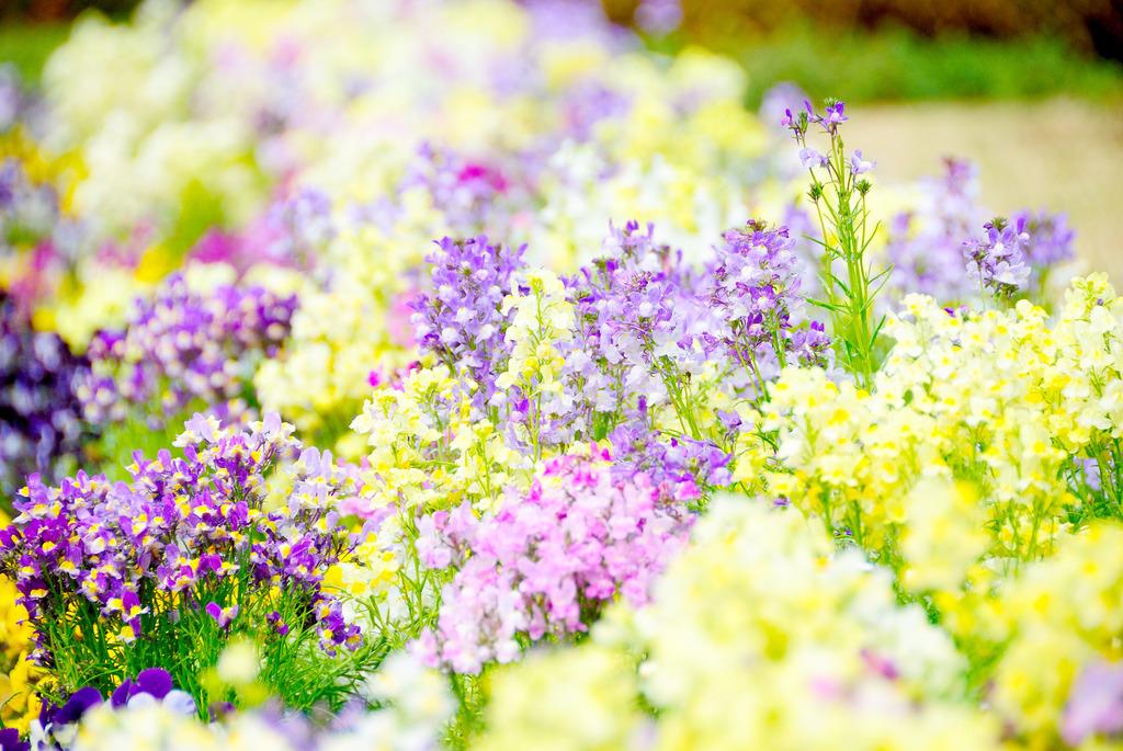 んもぅ、なんちゅうか、、、春。