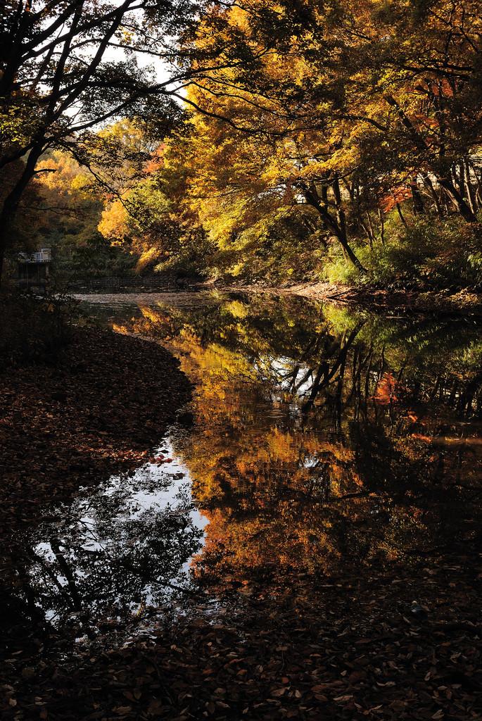 竹の山の紅葉Ⅱ