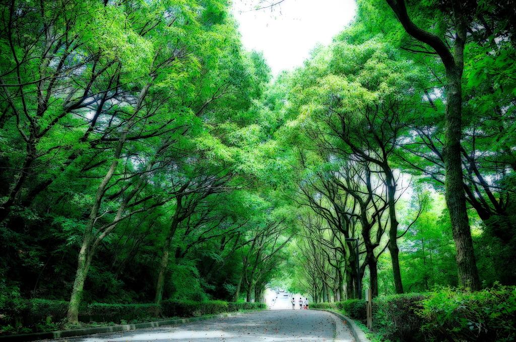 夏の散歩道