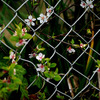 囚われの春
