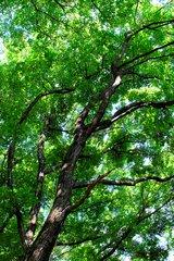 夏が育む木々
