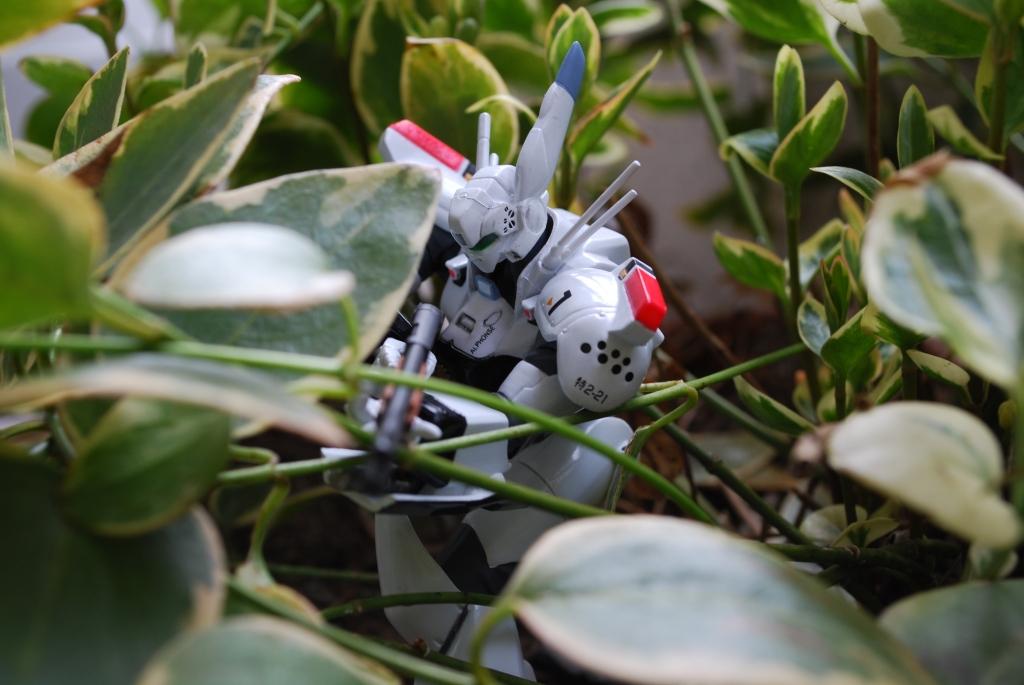 ジャングル戦!?