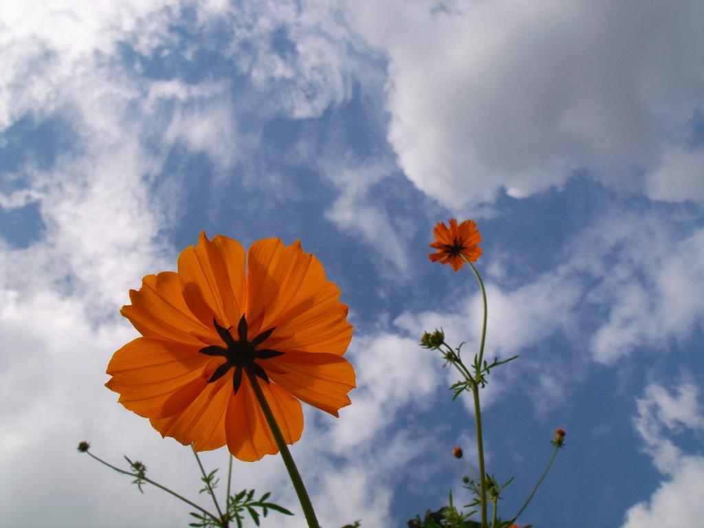 空と風とコスモス