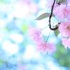 パステルの桜