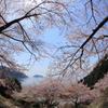 奥琵琶湖の春