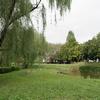 柳のある公園