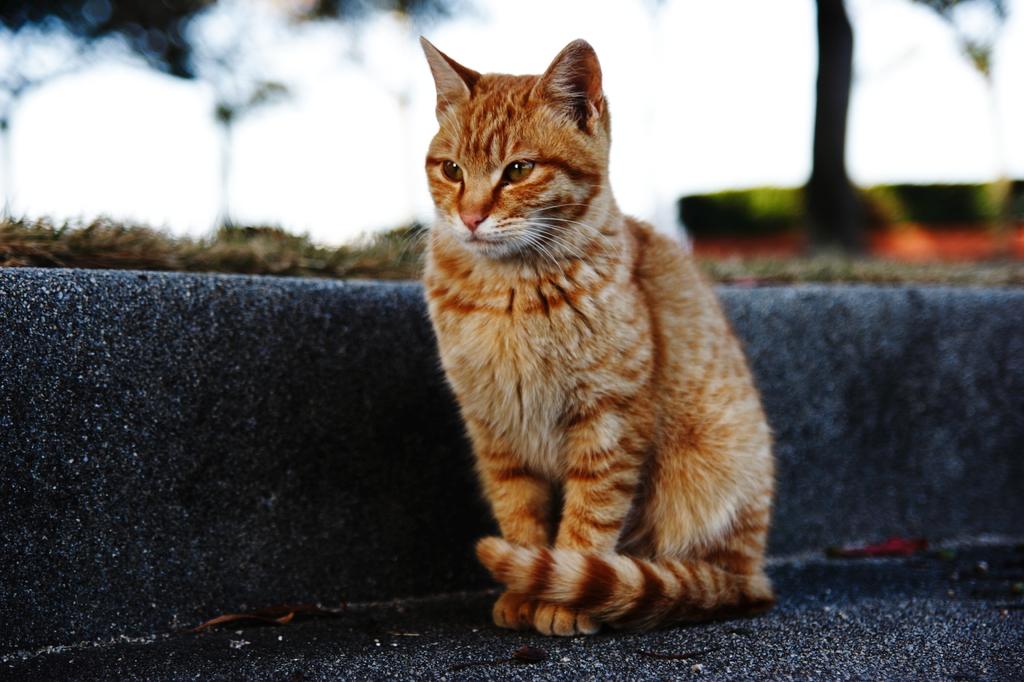 シャンとした猫