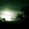 CANON Canon EOS 40Dで撮影した植物(Silhouette on green)の写真(画像)