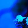 CANON Canon EOS 40Dで撮影した植物(blue)の写真(画像)