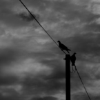 CANON Canon EOS 40Dで撮影した動物(暗)の写真(画像)