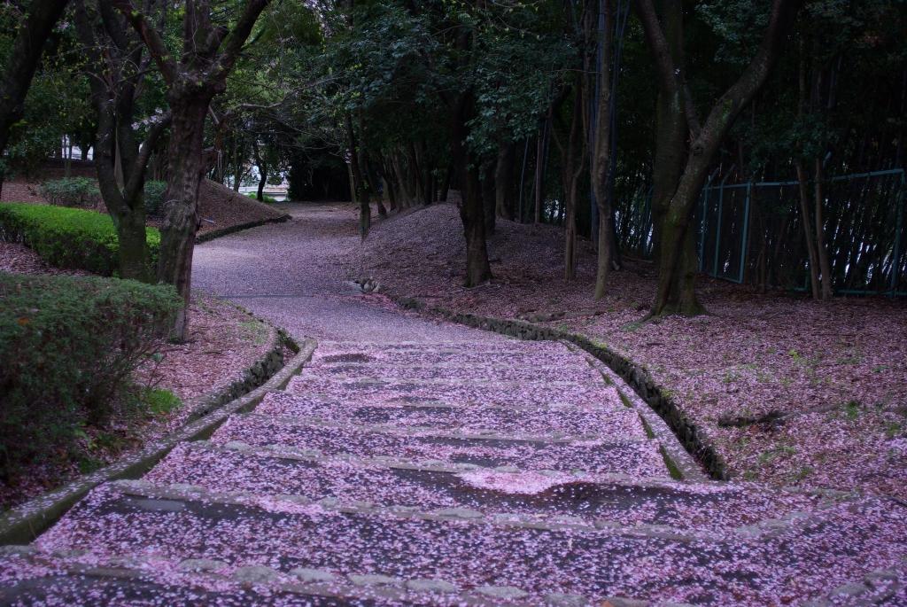 階段とsakura