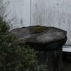 雨の庭13(固定された時間)