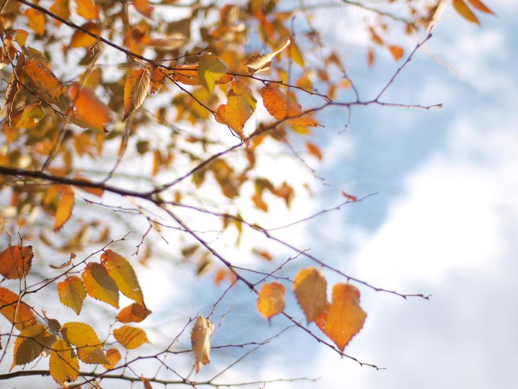 秋のそら。