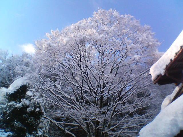 雪の晴れ間 20090115