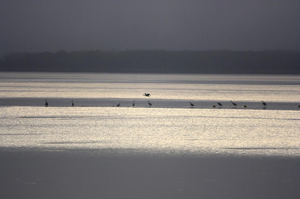水鳥ライン