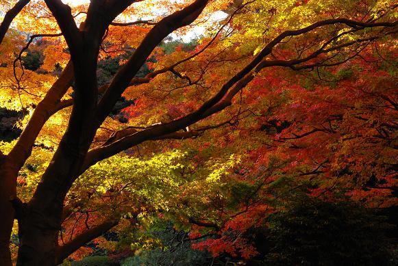 紅葉の東京都庭園美術館