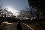 Spring sunlight