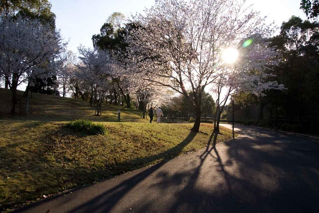 Spring sunlight2