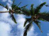 ハワイの思い出
