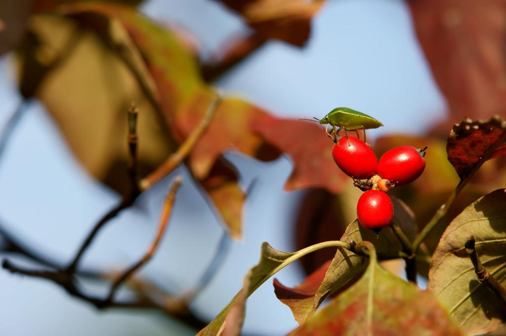 実乗りの秋
